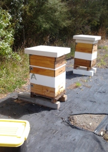 My Hives Today