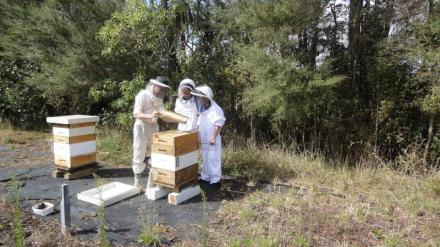 Claude and girls observing a frame of bees