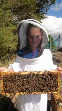 Danielle holding a frame of bees