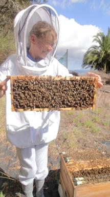 Devon holding a frame of bees